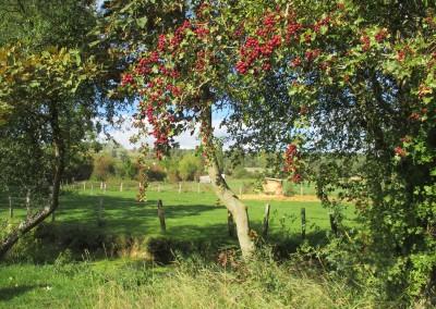 150927 FDon paysage VLCh (2)